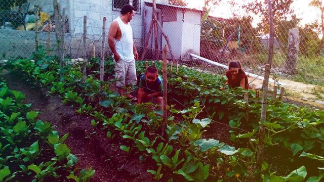 Mejorando la seguridad alimentaria